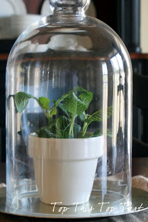 Using Glass Cloches In Your Decor