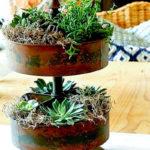 create a succulent centerpiece
