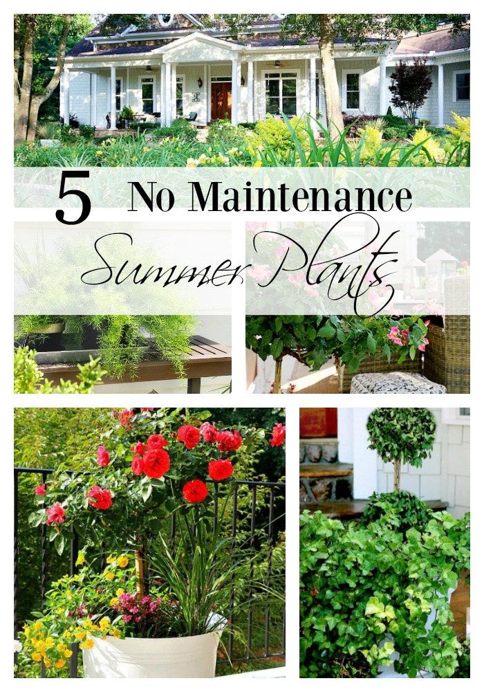 5 no maintenance summer plants duke manor farm for Plants that require no maintenance