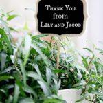 teacher appreciation planter