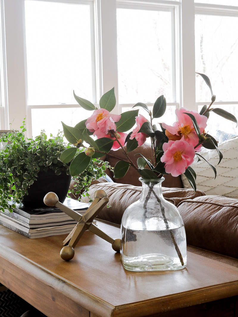 How to grow pretty pink blooms in the winter time
