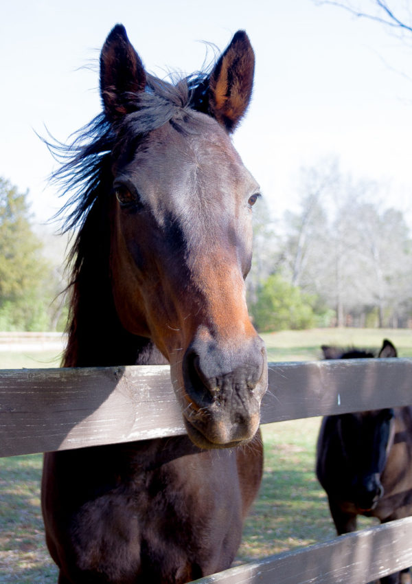 Friday at the Farm….A new Mare