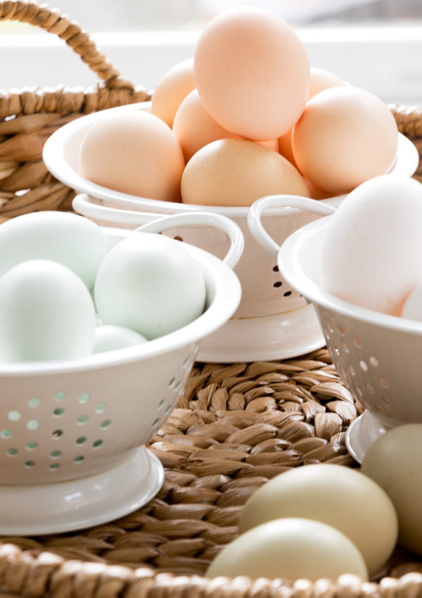 Friday at the Farm….why are my chickens eggs different colors