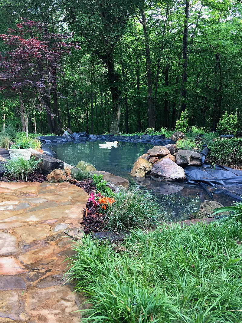 Monday Musings and my Pond and Pool Progress