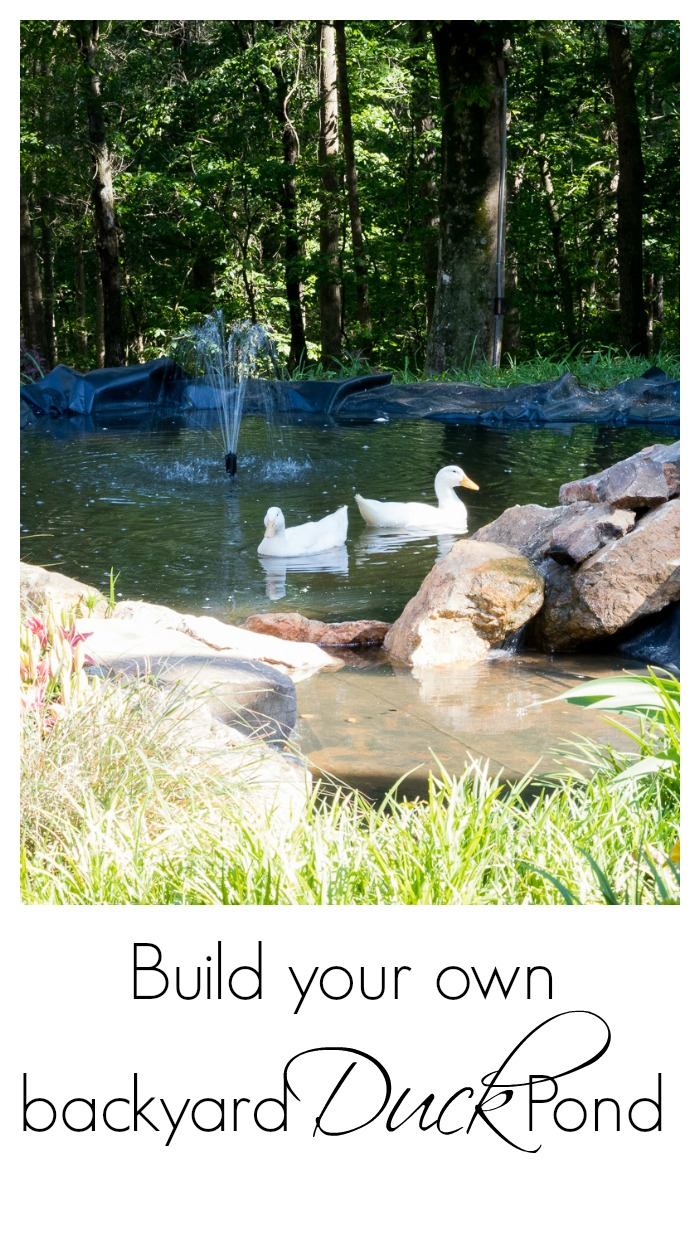 How to create a duck pond that every duck will love