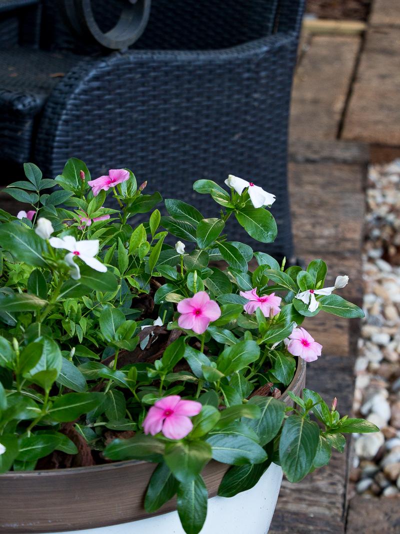 My favorite plants for your summer landscape