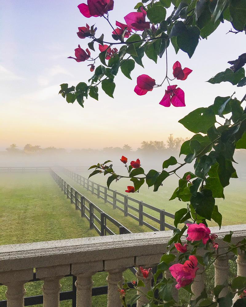 A look back at 2017 at Duke Manor Farm