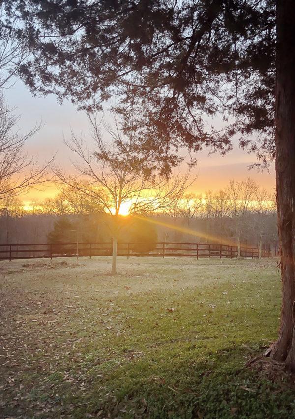Farm Friday At Duke Manor Farm