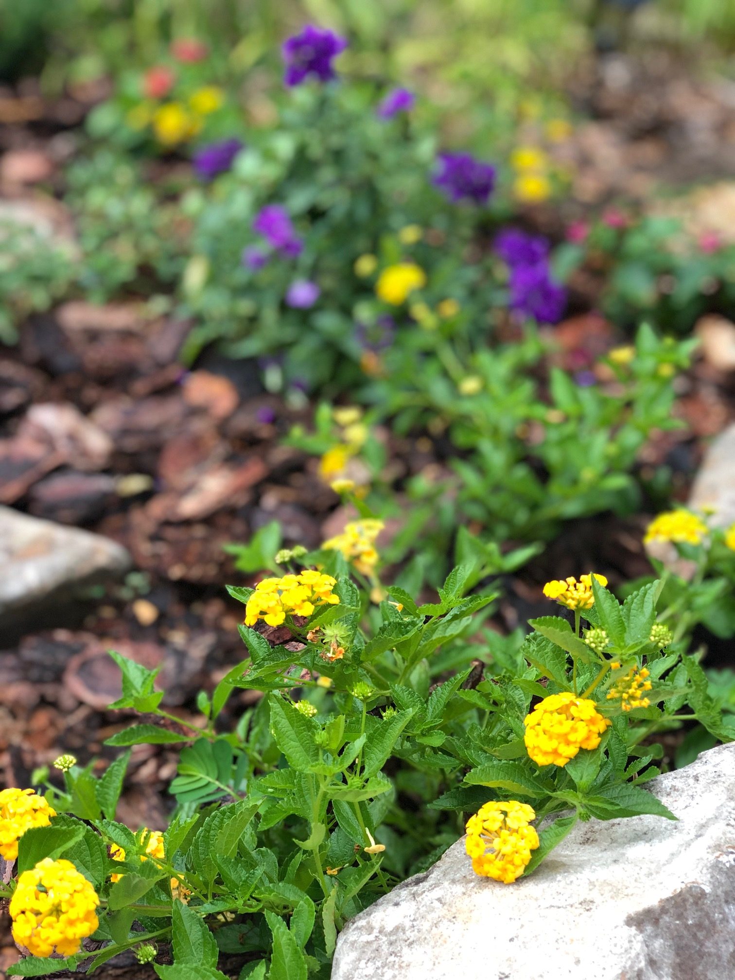 6 Summer Plants to grow whether your thumb is green or not