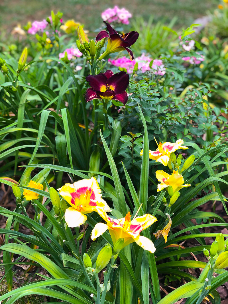 6 Summer Plants to grow