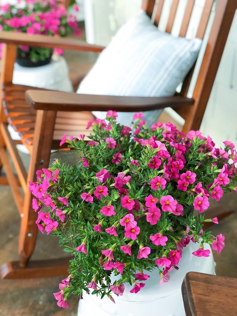 6 Summer Plants to grow this season