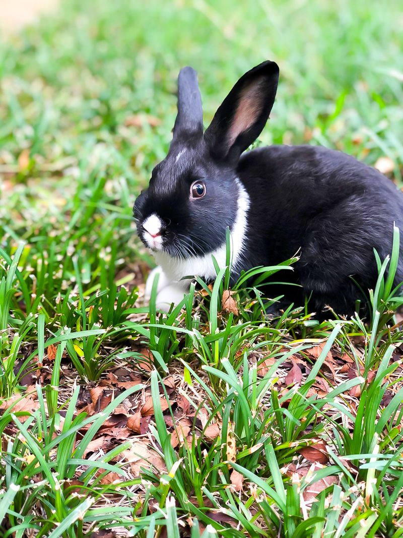Bunny Care 101 and Simple tips for a healthy bunny